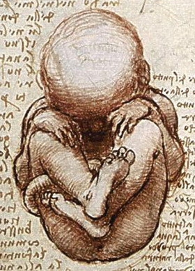 A foetus in the womb, a detail from a page of Leonardo da Vinci sketches