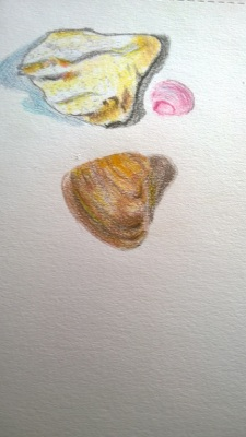 Sea stuff, photo of colored-pencil drawing by William Eaton, February 2017