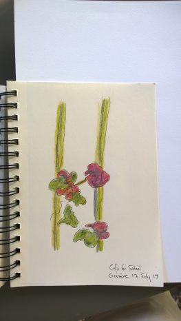 Red flowers at Café du Soleil, Genève, July 2017, colored pencils, drawing by William Eaton
