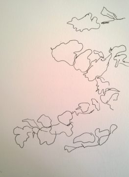Leaves outline, pen drawing by William Eaton, Genève, summer 2017 2 HR