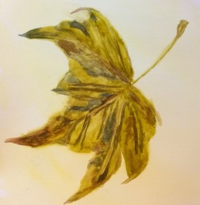 Fall_leaf_watercolor,_William_Eaton,_Dec_2017[1]