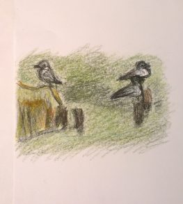 Two birds, phoographed with background, drawing by William Eaton, HR