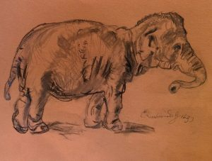 Copy of Rembrandt's Elephant, by William Eaton, Feb 2018