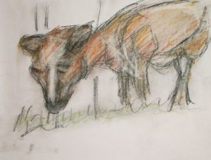 Calf, Shaker Village, oil pastel drawing by William Eaton, Oct 2018 - 1