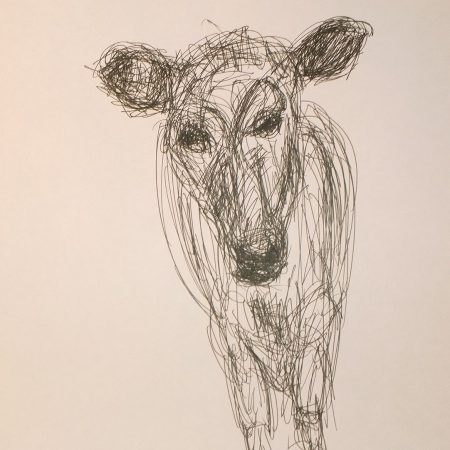 Calf, Shaker Village, pen drawing by William Eaton, Oct 2018 - 1